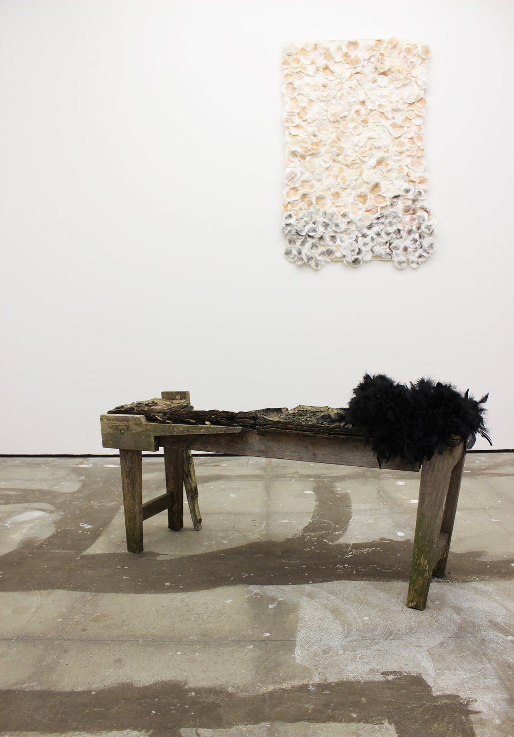Rotting, 2018  Art bench from 2008, clamshell, ash, feather boa, paint