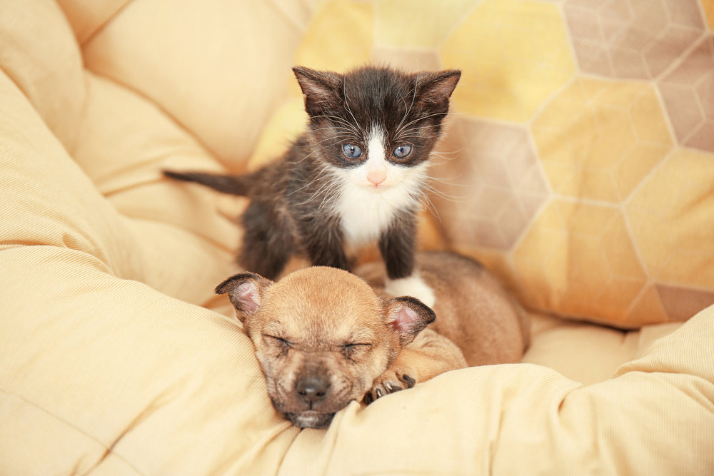 Port-Orchard-Animal-Clinic_Dr-Liz-Oien-DVM_Veterinarian_pet-care-puppy-kitten.jpg