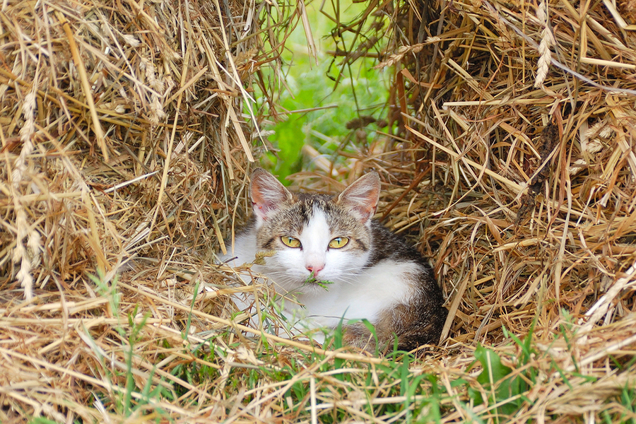 Port-Orchard-veterinary_outdoor-cat-care.jpg