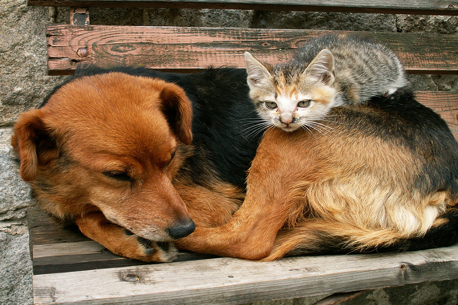 kitten-with-dog_pet-care.jpg
