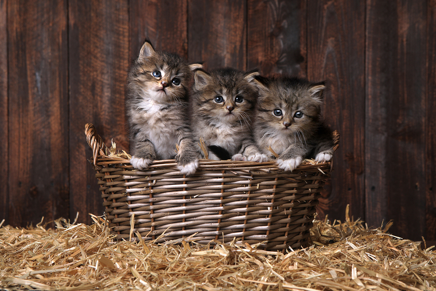 kitten-wellness-exam-liz-oien.jpg