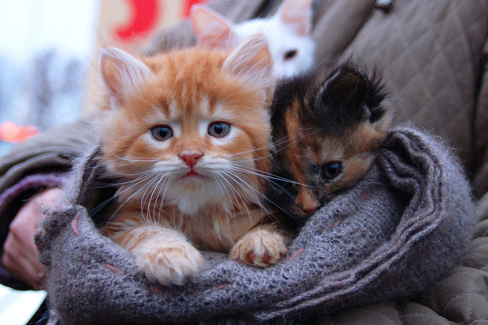 cute-kittens-liz-oien-port-orchard.jpg
