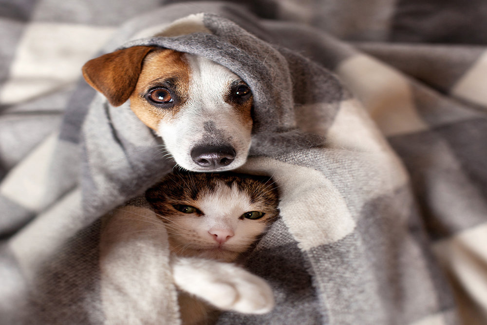 dog-cat-love-medical-care-vet.jpg