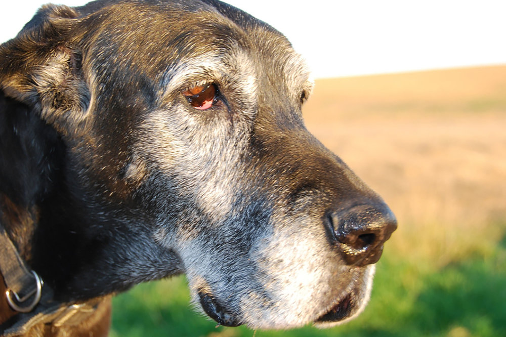 Senior Pet Care  With early detection, we may be able to reverse some conditions that come with age, or at least slow down how fast they progress, giving us extra years with our senior companions.  LEARN MORE