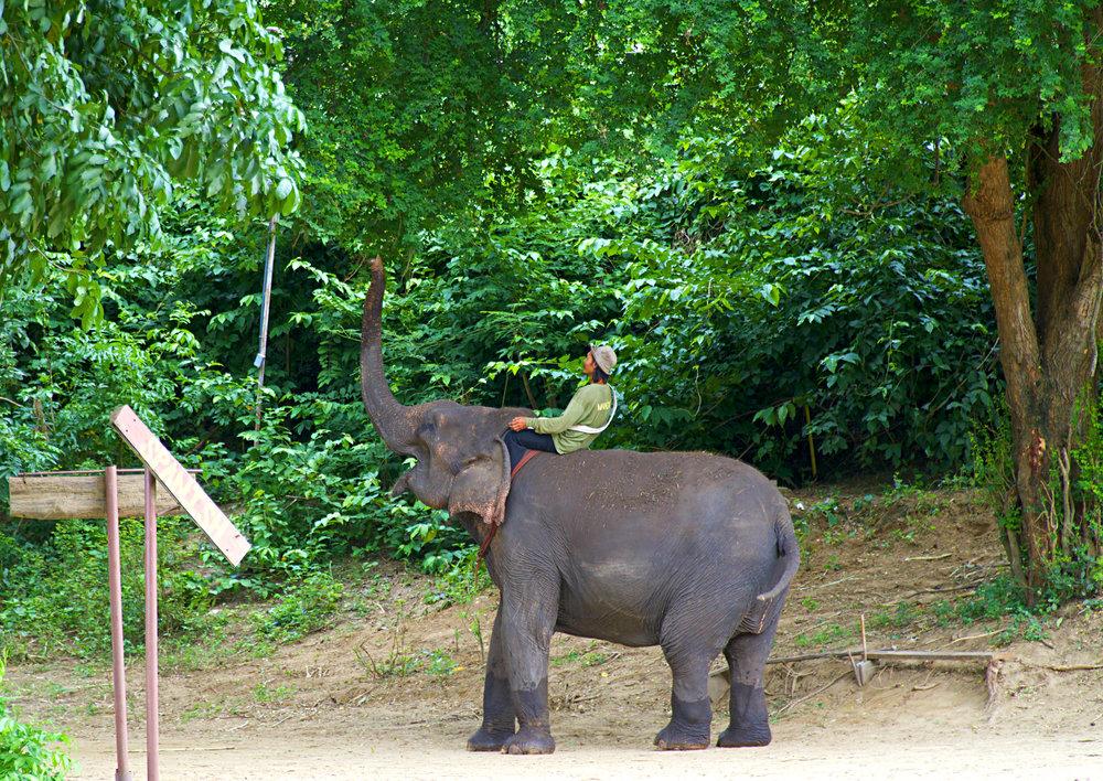 GOAL TRAVELER_ ELEPHANT TRUNK_THAILAND.jpg