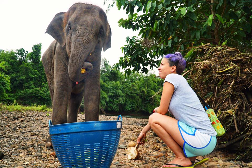 GOAL TRAVELER_FEEDING_ELEPHANT.jpg