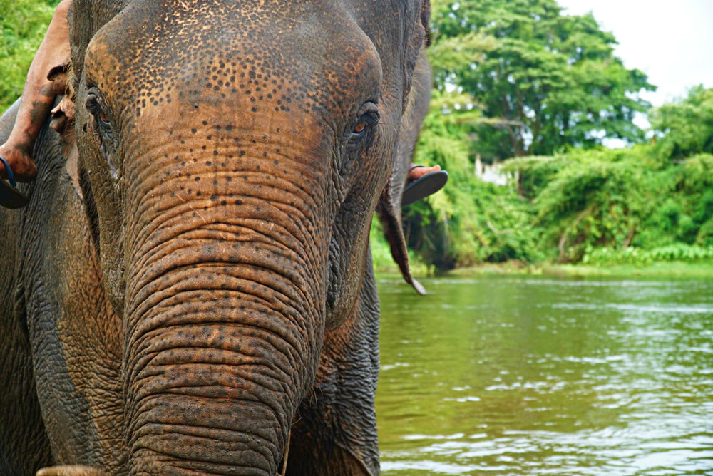 GOAL TRAVELER_CLOSEUP_ELEPHANT.jpg