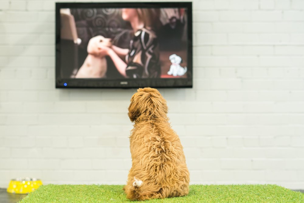 Mental Stimulation for dogs, play a huge part for their well-being and curiosity.