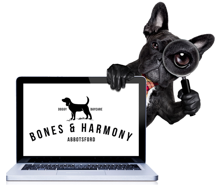 Bookings made easy - Bones & Harmony will create your furry friend an online profile when you join our pack.You can then book him/her into doggy daycare via our easy online Booking System - just like you would a Yoga Class!