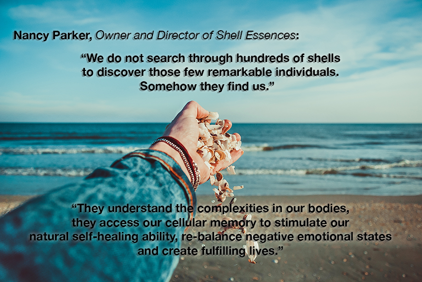 shell essences quote.png