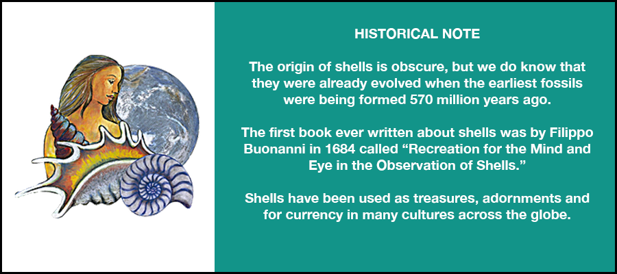 Historical Note Shells.png