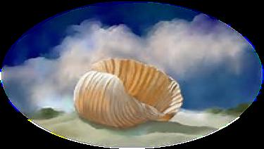 shell illustration.png