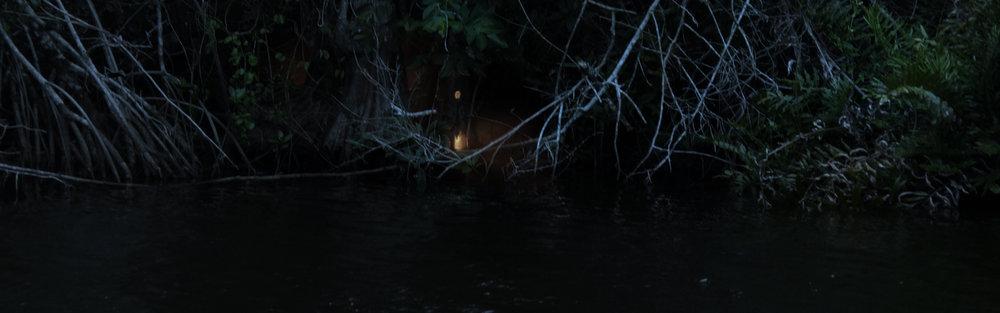 Dark_Forest_001.jpg