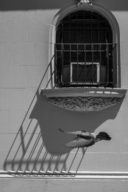WINDOW SHADOWS, 91st Street, New York City