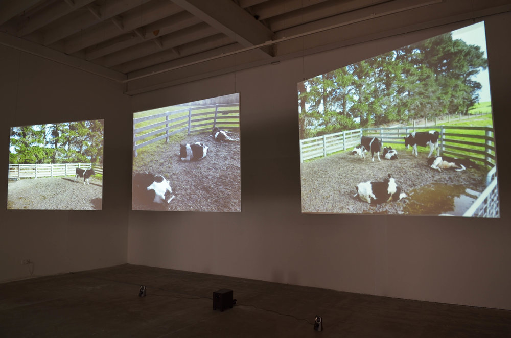 'Cow Sleep'_Installation View_2012.jpg