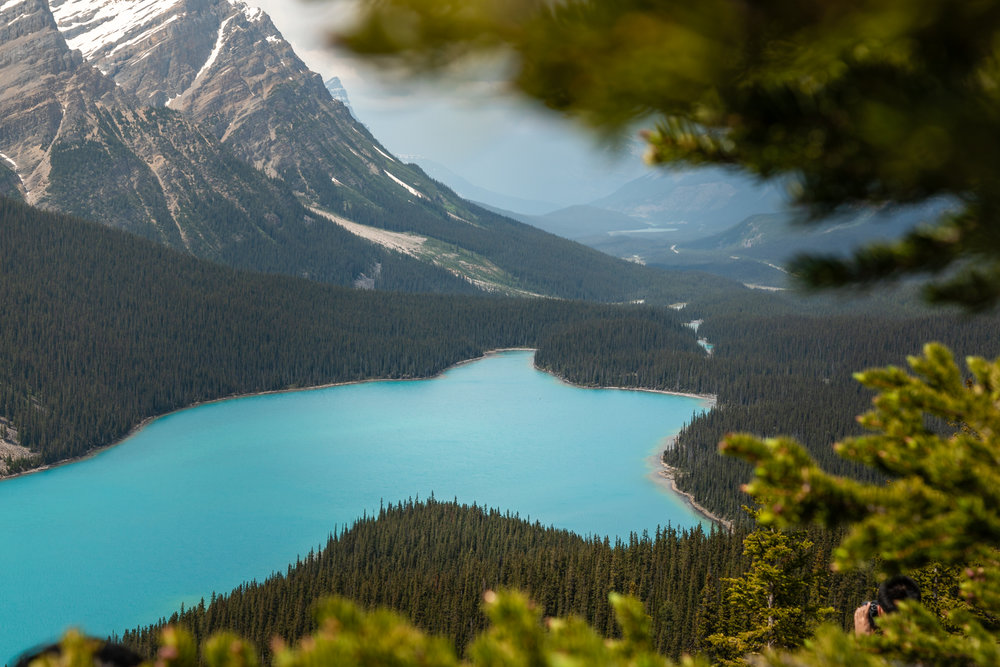 Peyto Lake really does look like a fox! It's roughly a 30 minute drive from Lake Louise to Peyto Lake.