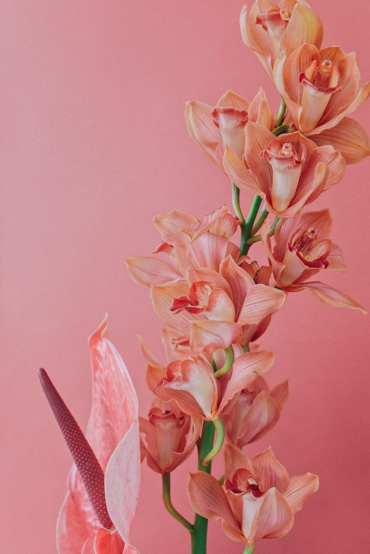 neon-pink (3).JPG