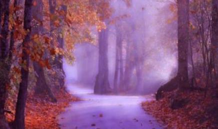 nature-3-copy.jpg