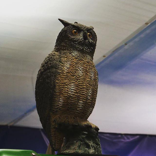 Have you spotted our Bernard in the centre? He's a pretty great owl-pine skiier.⠀ ⠀ ⠀ #ski #snowsports #winter #snow #powder #alpine #skiing #fitfam #irishfitfam #instafit #train #exercise #fitnessaddict #fitforthelongrun #freestyle #freeski #skitouring #owls #owlsofinstagram #bird