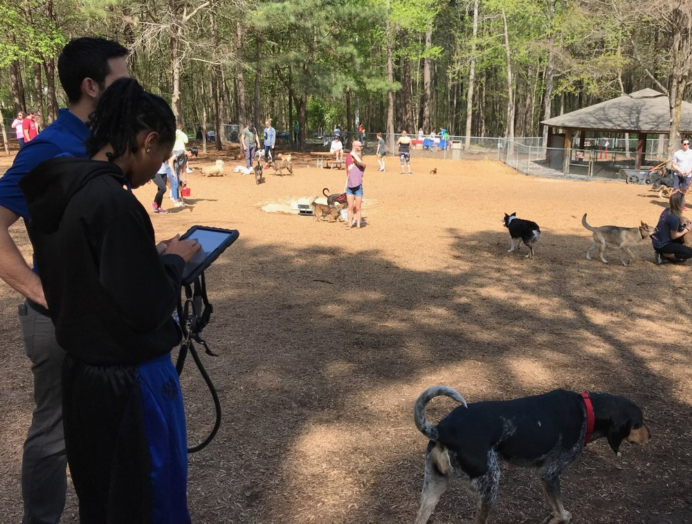 A participant takes the Dog Park Survey