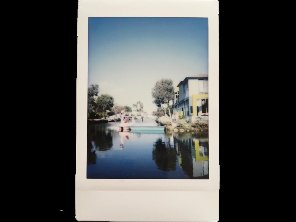 Flamingo  Los Angeles, California, USA