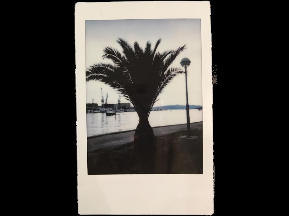 Palm Saturdays  Trogir, Croatia