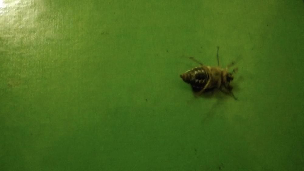 Rik Peeters - A Bug Report.jpg