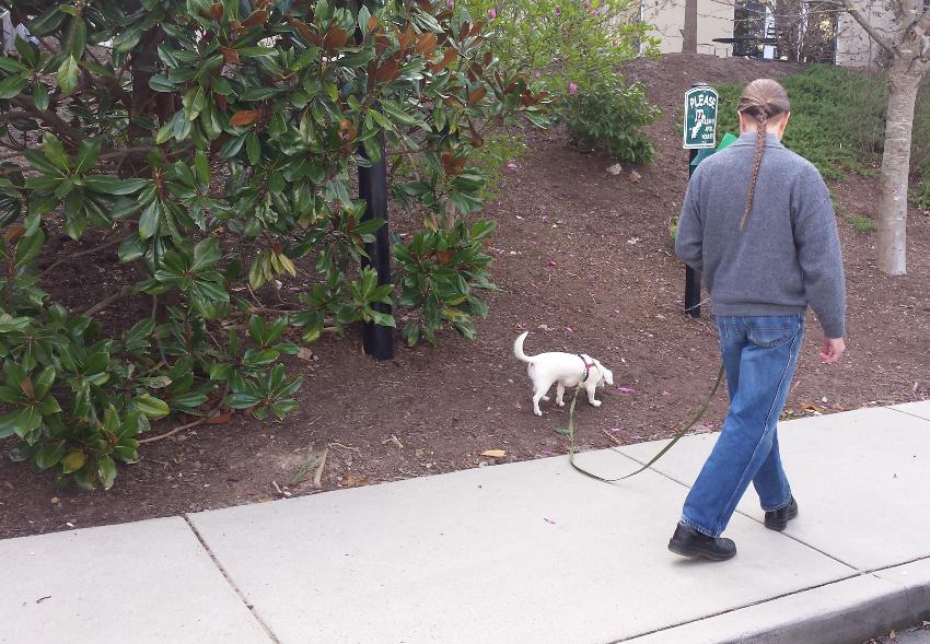 Sniffing-Walk-With-Glenn-1-cropped-850x589.jpg