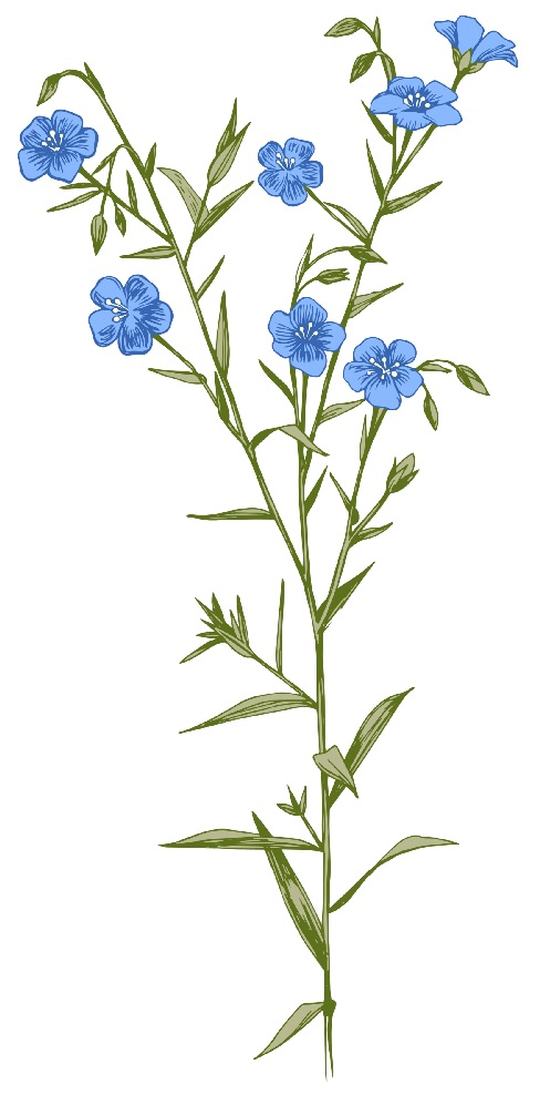 flax with blooms.jpg