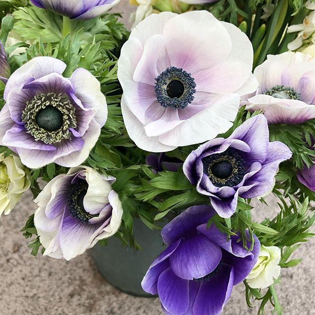 Anemones, another spring favourite ready to go in a beautiful bouquet.