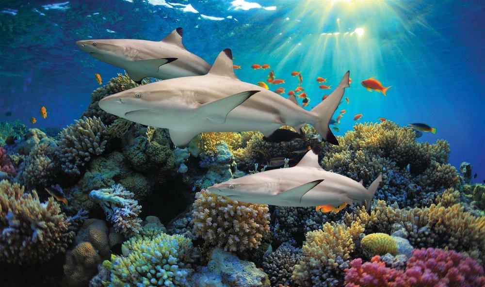 nationalaquarium-btr-sharksmiddle.jpg
