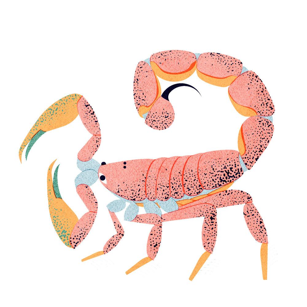 zodiac scorpion 4.jpg