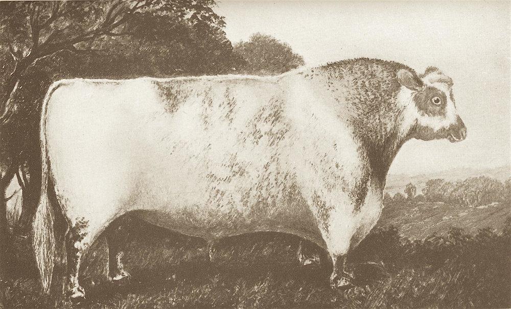Duke of Northumberland (1904).jpg