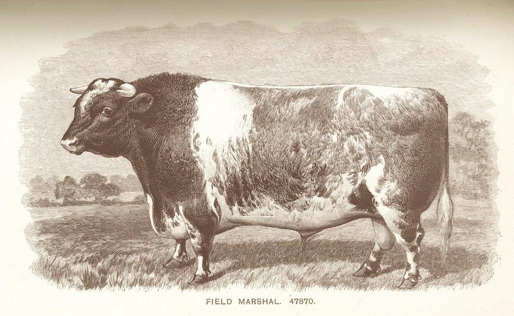 Field Marshal (47870).jpg