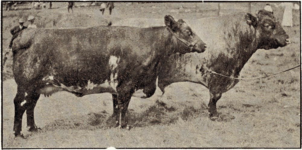1907 Royal Flora x & Roan Hero x (2).jpg