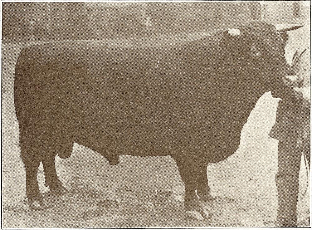 1901 Lavender Viscount 124755.jpg