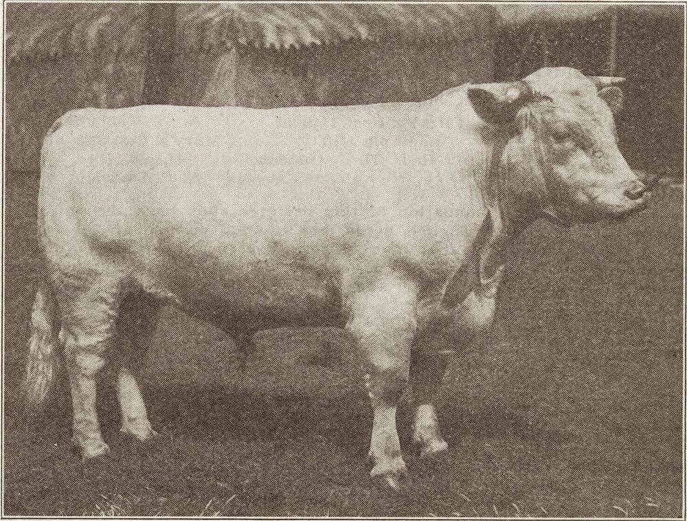 1910 Cumberland's Last.jpg