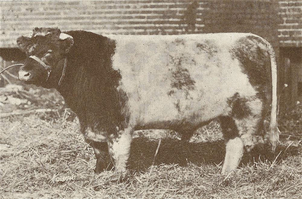 1919 Ameroyal G.Ch. Marshal Joffre.jpg