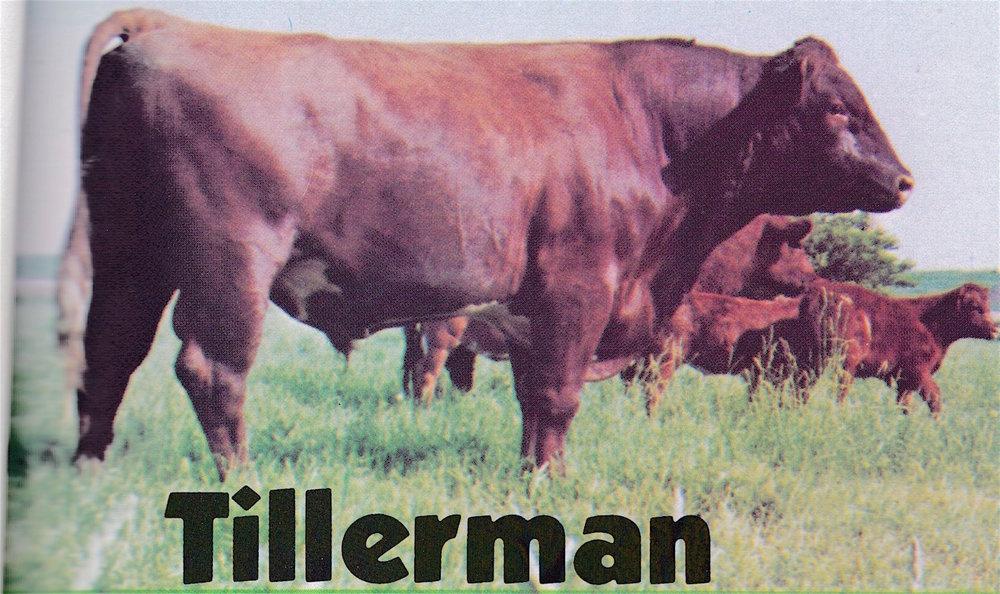 Tillerman.jpeg