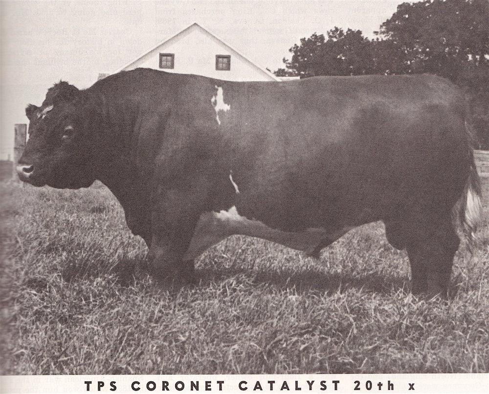 TPS Coronet Catalyst 20th.jpeg