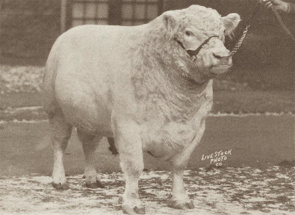 1928 Lord Collynie x.jpg