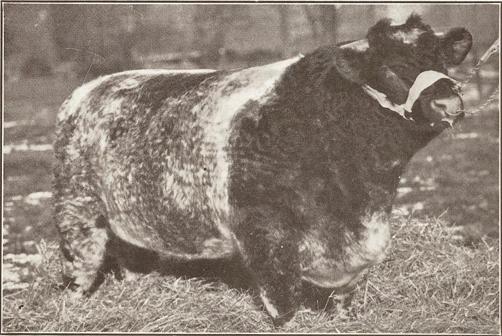 1929 Edellyn Favorite 1430250.jpg
