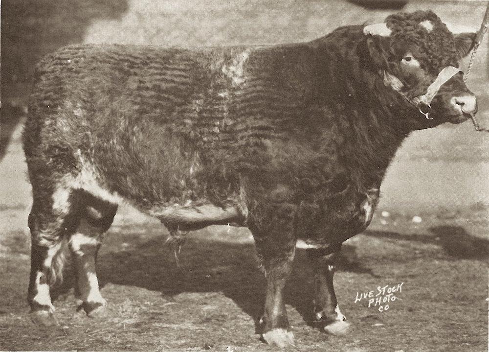 1928 Browndale Goldspur.JPG