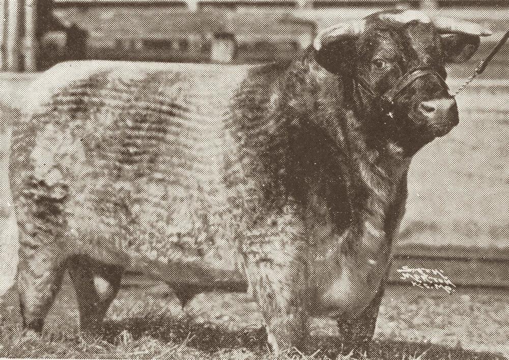 1933 Leveldale Dreadnaught.jpg