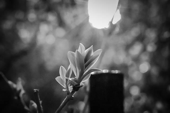 Light on Buds-2.jpg