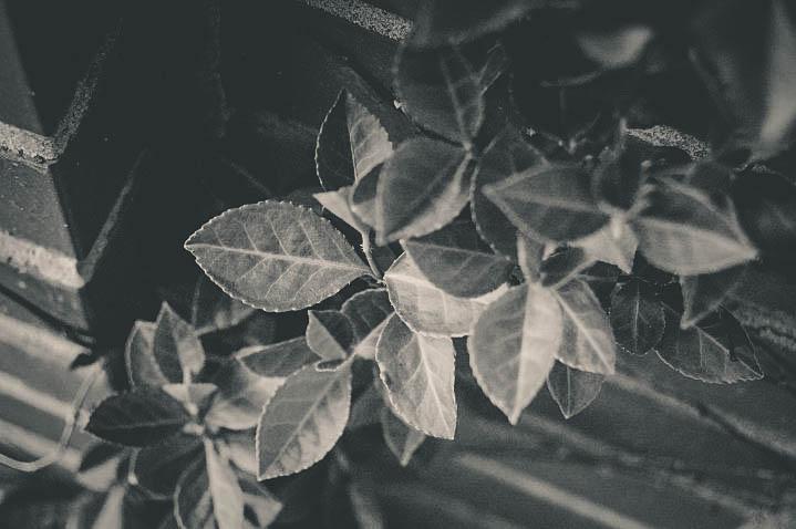 Leaves going down-2.jpg