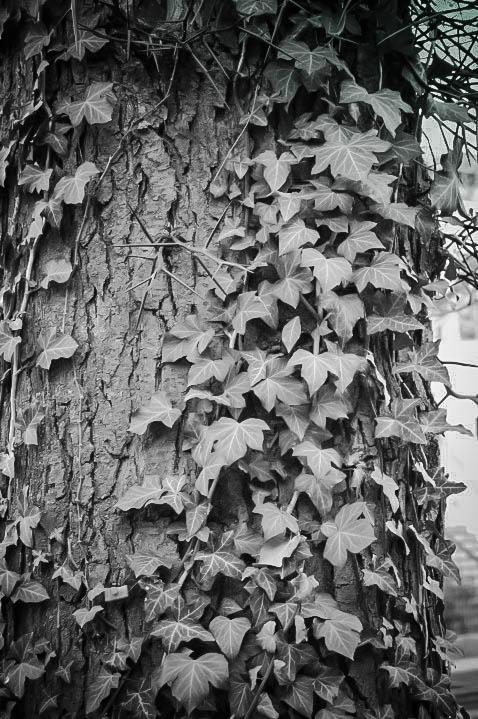 Leaves 2-2.jpg