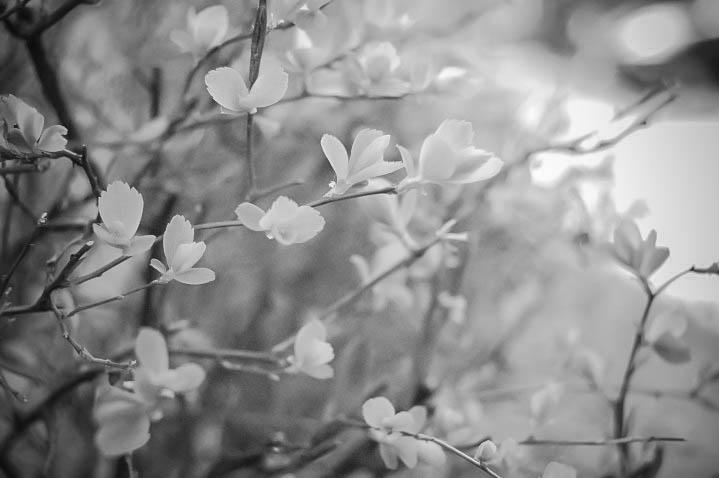 Leaves 1-2.jpg