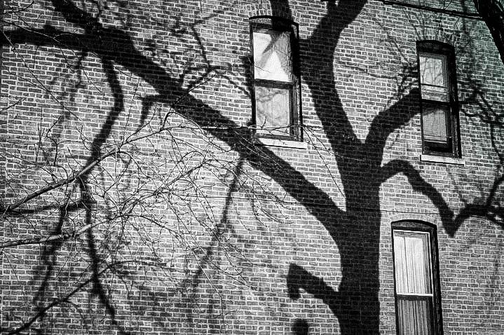 Tree+Shadow-2.jpg