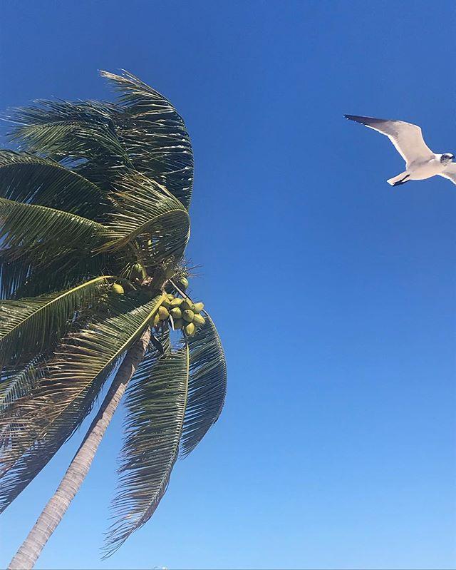 Playa. . . #vacation #vacationmode #mexico #playadelcarmen #beach #palmtrees #palm #seagull #nofilter